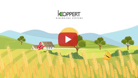Imagen vídeo Koppert
