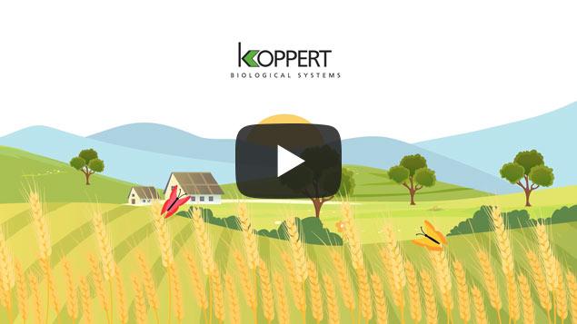 Miniatura video animado